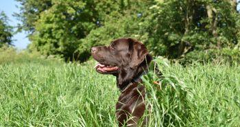 Ako naučiť psa povel SADNI?