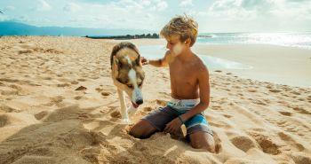 10 tipov pre perfektnú dovolenku pri mori so psom