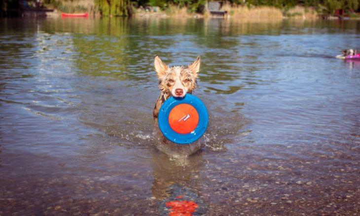leto so psom, lietajúci tanier pre psa, hračky do vody pre psov, chuckit hydroflyer, brunov obchodík