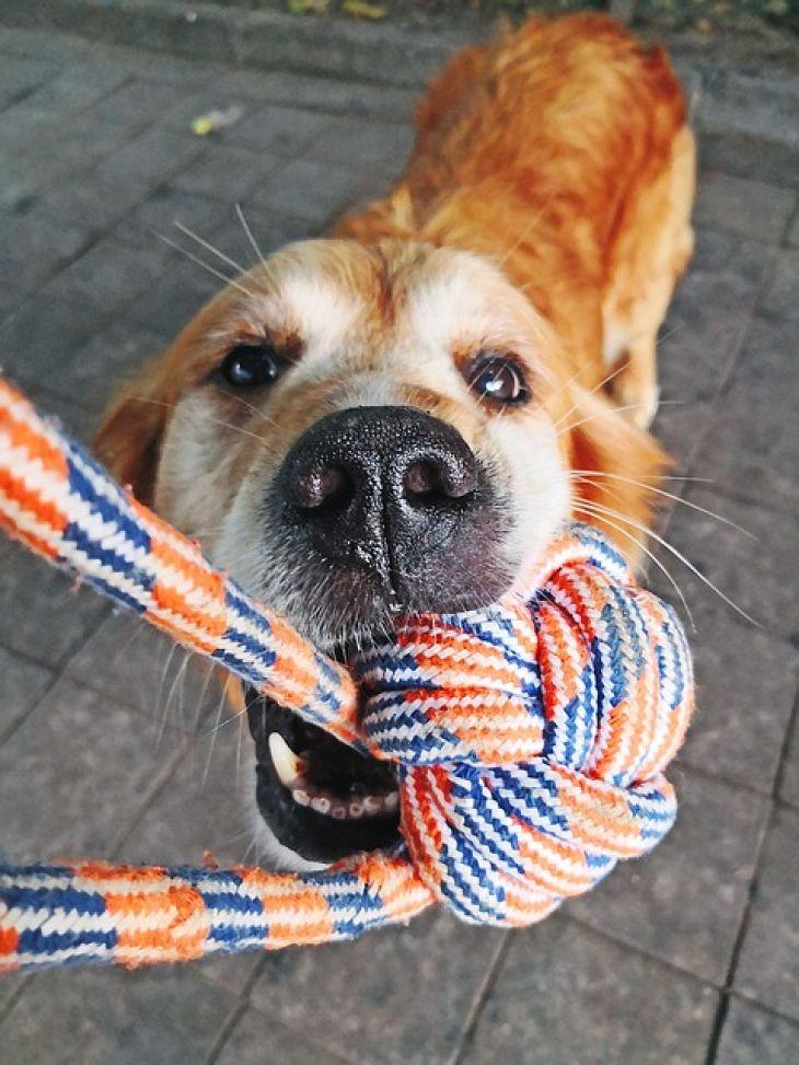 pretahovanie-pes-hracka-steniatko