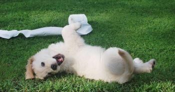 10 tipov od skúsených majiteľov psov na tému: Ako naučiť psa robiť potrebu vonku