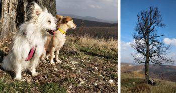 Tip na výlet so psom: Vrch Skalnatá