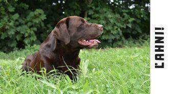 Ako naučiť psa povel ĽAHNI?