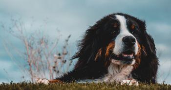 Čo je to hot spot u psa a ako ho liečiť?