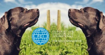 Čo je to FCI?