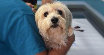 1. [ROZHOVOR] Vakcinácia psov