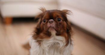 2. [ROZHOVOR] Vakcinácia psov
