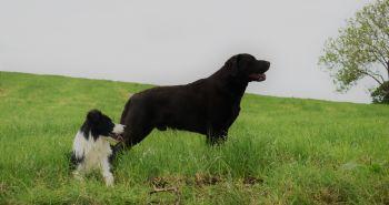 STOJ! Ako naučím psa tento povel?