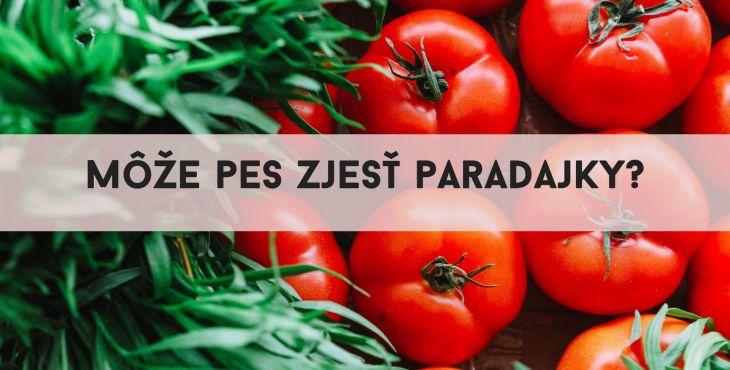 Pes a paradajky. Môže pes zjesť paradajky či pre neho znamenajú hrozbu?