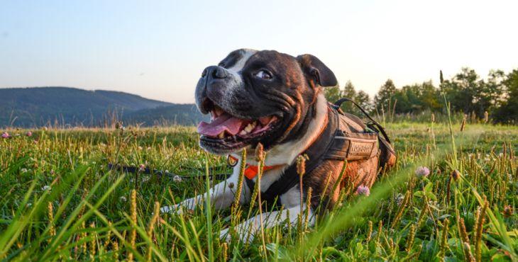 10 znakov ktoré ti napovedia, či je tvoj pes šťastný