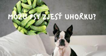 Mačky sa uhoriek boja. A čo psy? Môžu psy zjesť uhorky?