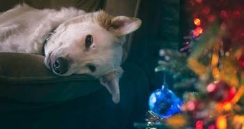 Máš psa, ktorý sa nechce hrať? Nauč ho to!