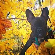 Bruno v korunách stromů