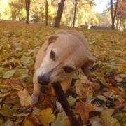 Jesenné hrátky :)