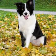 Tessinka a farebna jesen