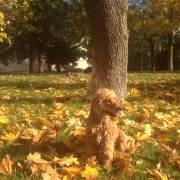 Tumtum a jesen