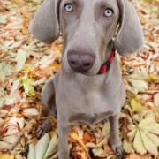 Gessy a jej prvá jeseň