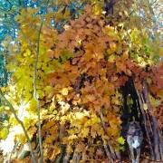 Jesenný prístrešok