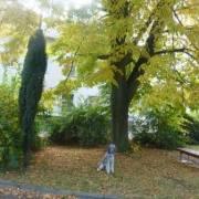 Zlatý strom