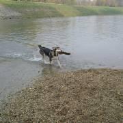 Sírius v rieke