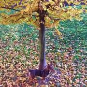 Splívanie s jeseňou