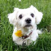 Lilly v prírode..:-)