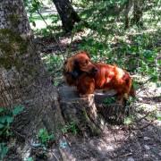 Lesná turistika