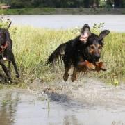 DaTarti v akcii vo vode :)