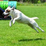 Daphne a agility
