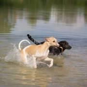 psy a voda :)