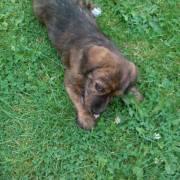 Náš malý psík Mišo