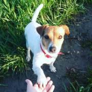 Pes - najlepší spoločník na túrach