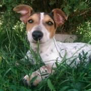 Mia si leží v tráve