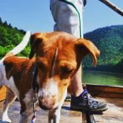 Pes na dovolenke