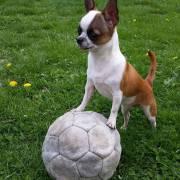 Futbalistka Zizi Top