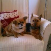Nicky a Ellie