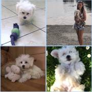 Monty, 6 mesiacov ♥
