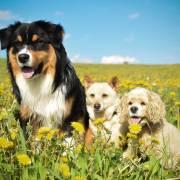 Sardy, Stella a Lilly