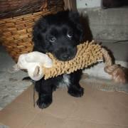 Charlie a opička