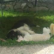 Bonnie a Kessy