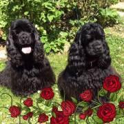 Betka a Daisy. 2 a  1 rok