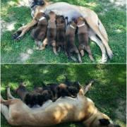 Najlepšia psia maminka