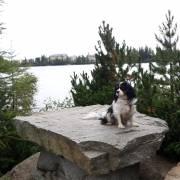 Pes v horách