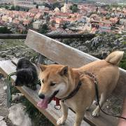 Pes na dovolenke v zahranici