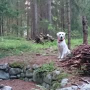 Mimi na horách