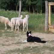 Pri ovečkách na dovolenke
