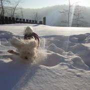 Andree v snehu :)