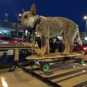 Longboardista Loki