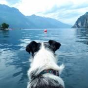 Psie dobrodružstvá v Itálii