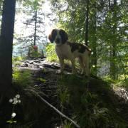 S Brokom na tripe po horách